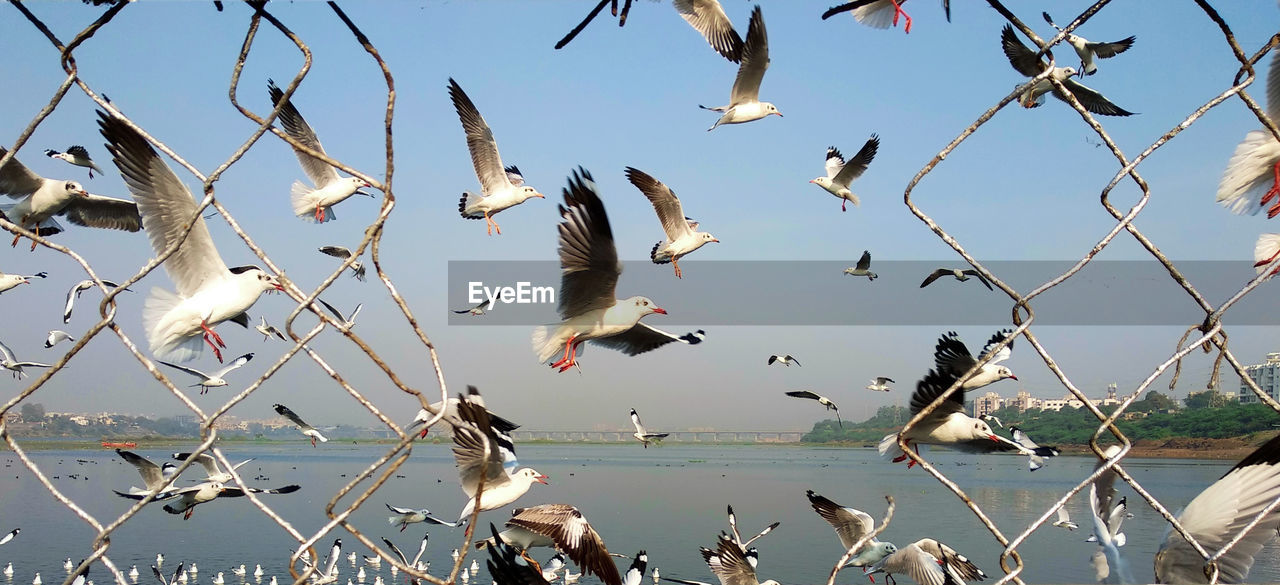 bird, animal wildlife, animals in the wild, vertebrate, animal, animal themes, group of animals, water, flying, sky, spread wings, nature, large group of animals, no people, seagull, day, beauty in nature, mid-air, sea, flock of birds
