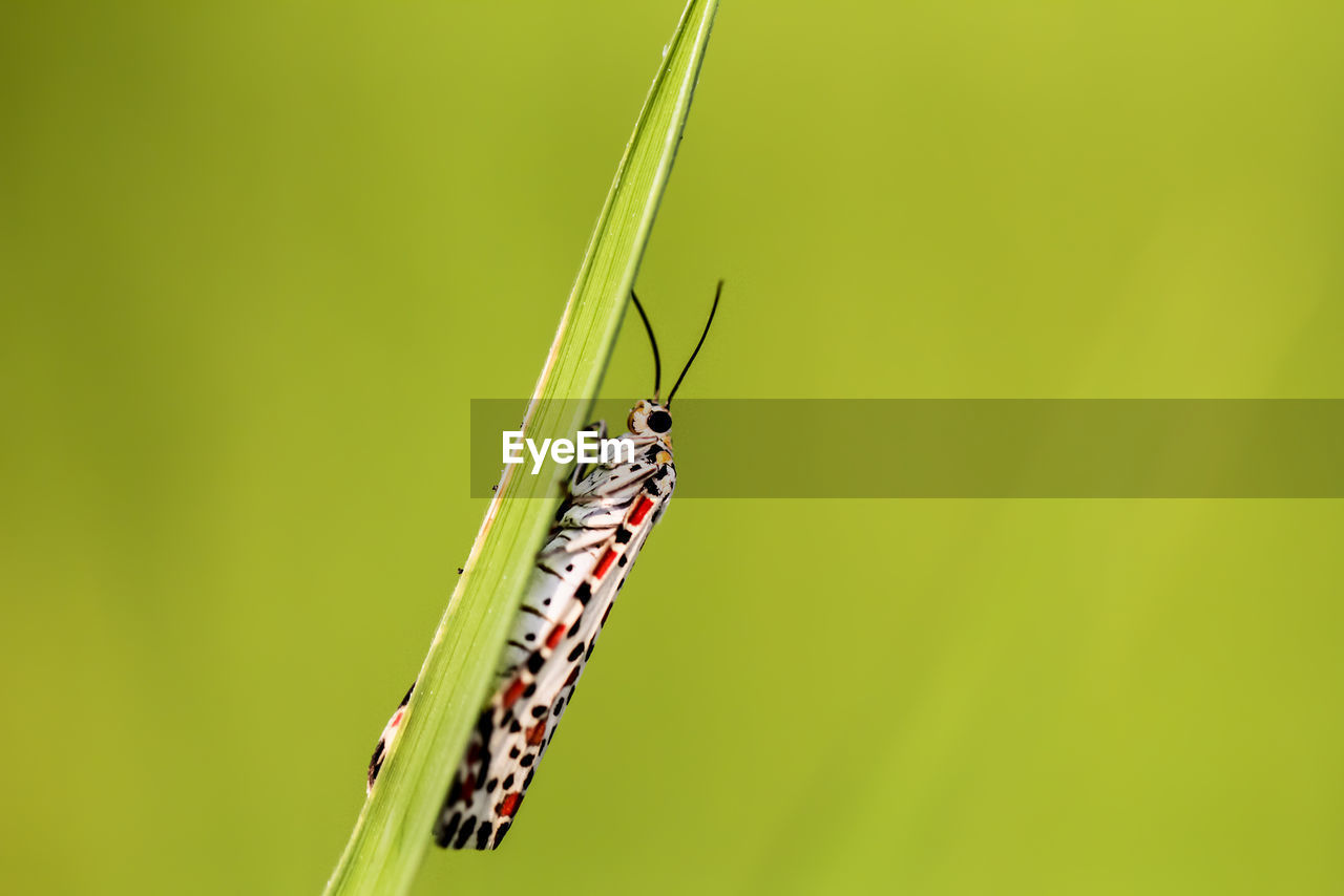one animal, animal wildlife, invertebrate, insect, animals in the wild, animal themes, animal, close-up, green color, focus on foreground, plant, no people, nature, animal wing, day, copy space, zoology, beauty in nature, outdoors, leaf, blade of grass