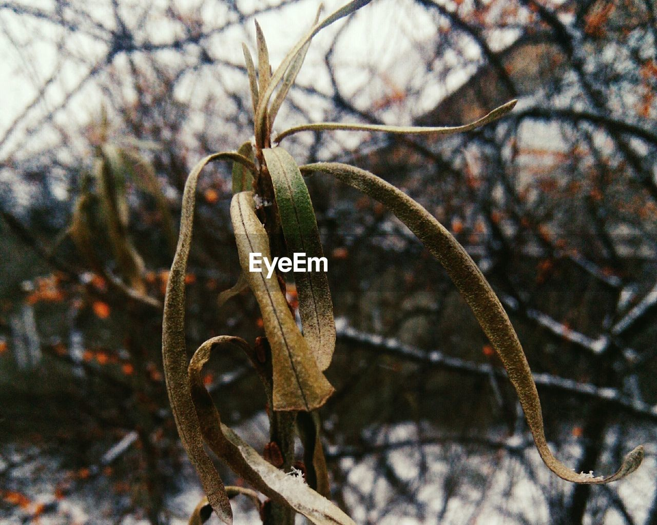 no people, focus on foreground, nature, day, close-up, rusty, outdoors, branch, winter