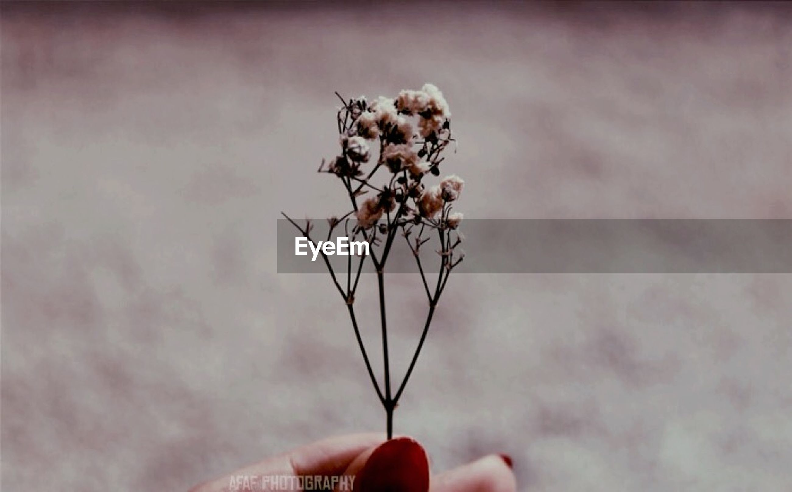 person, holding, part of, human finger, cropped, unrecognizable person, one animal, animal themes, close-up, flower, focus on foreground, personal perspective, stem, dry, insect, nature, sky