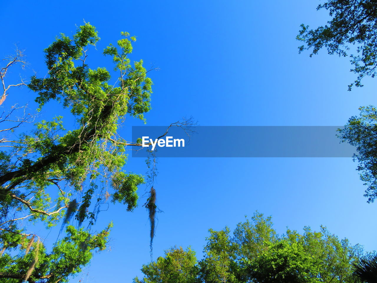 plant, tree, blue, sky, low angle view, growth, beauty in nature, green color, tranquility, no people, nature, clear sky, day, branch, outdoors, sunlight, tranquil scene, scenics - nature, green, idyllic, tree canopy