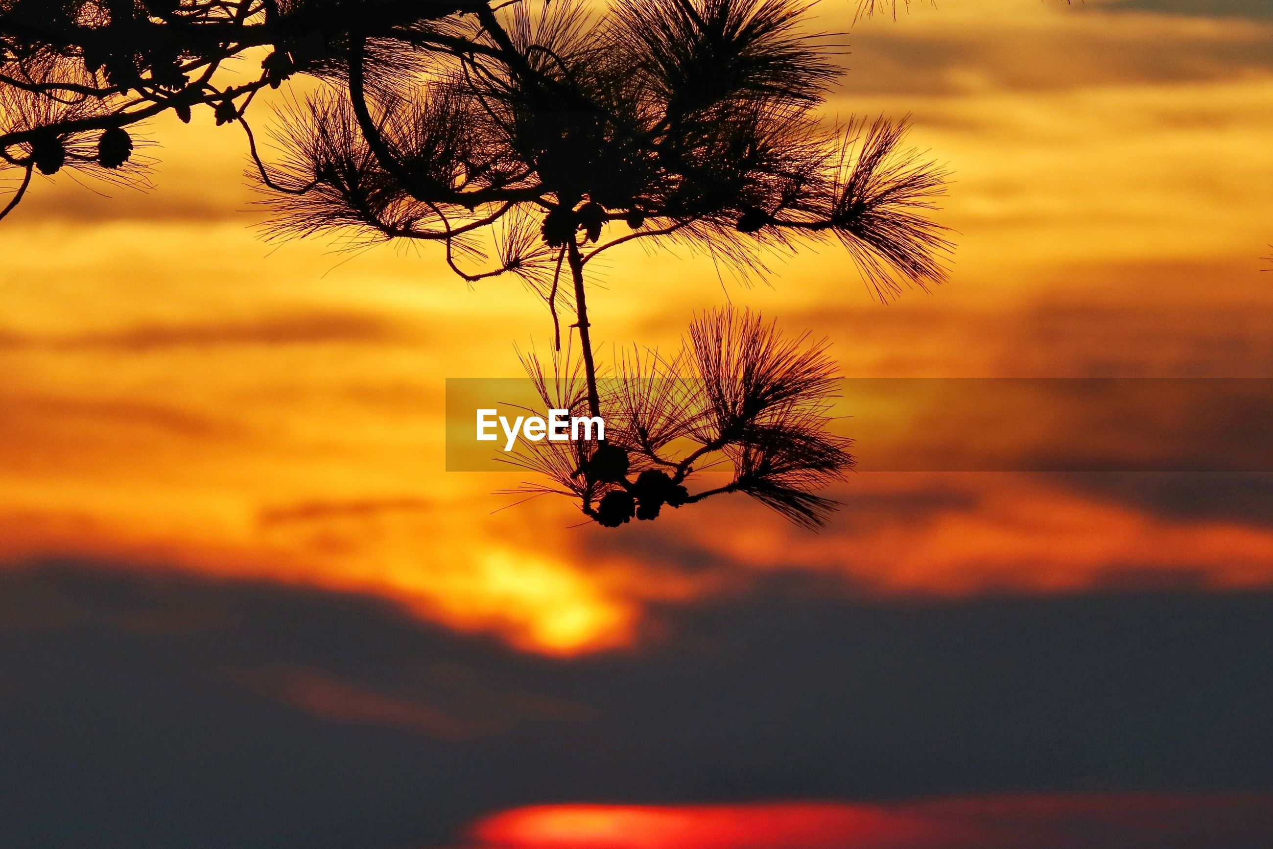 SILHOUETTE PLANT AGAINST ORANGE SKY