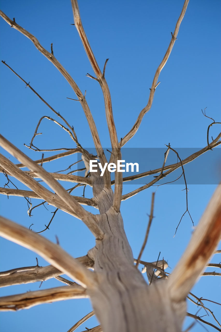 sky, plant, low angle view, tree, clear sky, no people, branch, day, nature, bare tree, blue, beauty in nature, outdoors, tranquility, growth, sunlight, close-up, dead plant, selective focus, animals in the wild, complexity