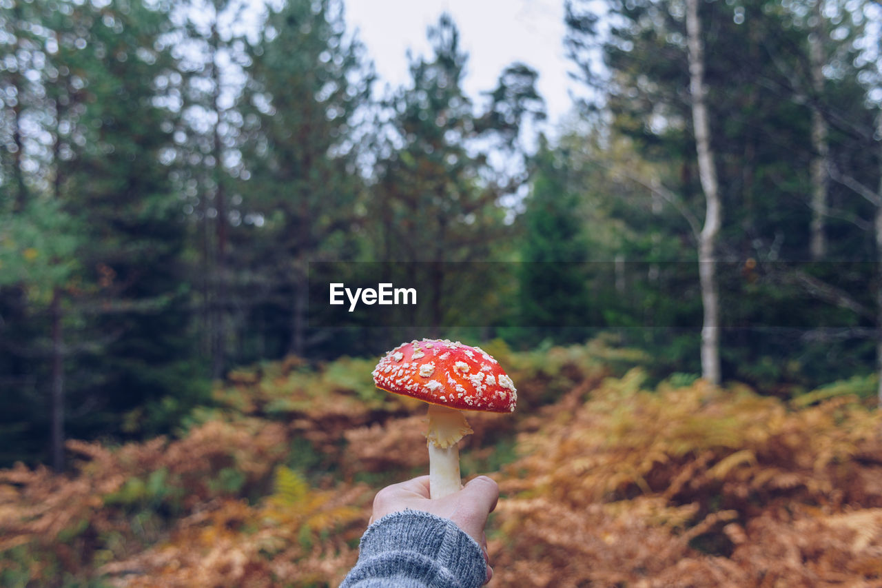 Cropped Hand Of Person Holding Mushroom Against Trees