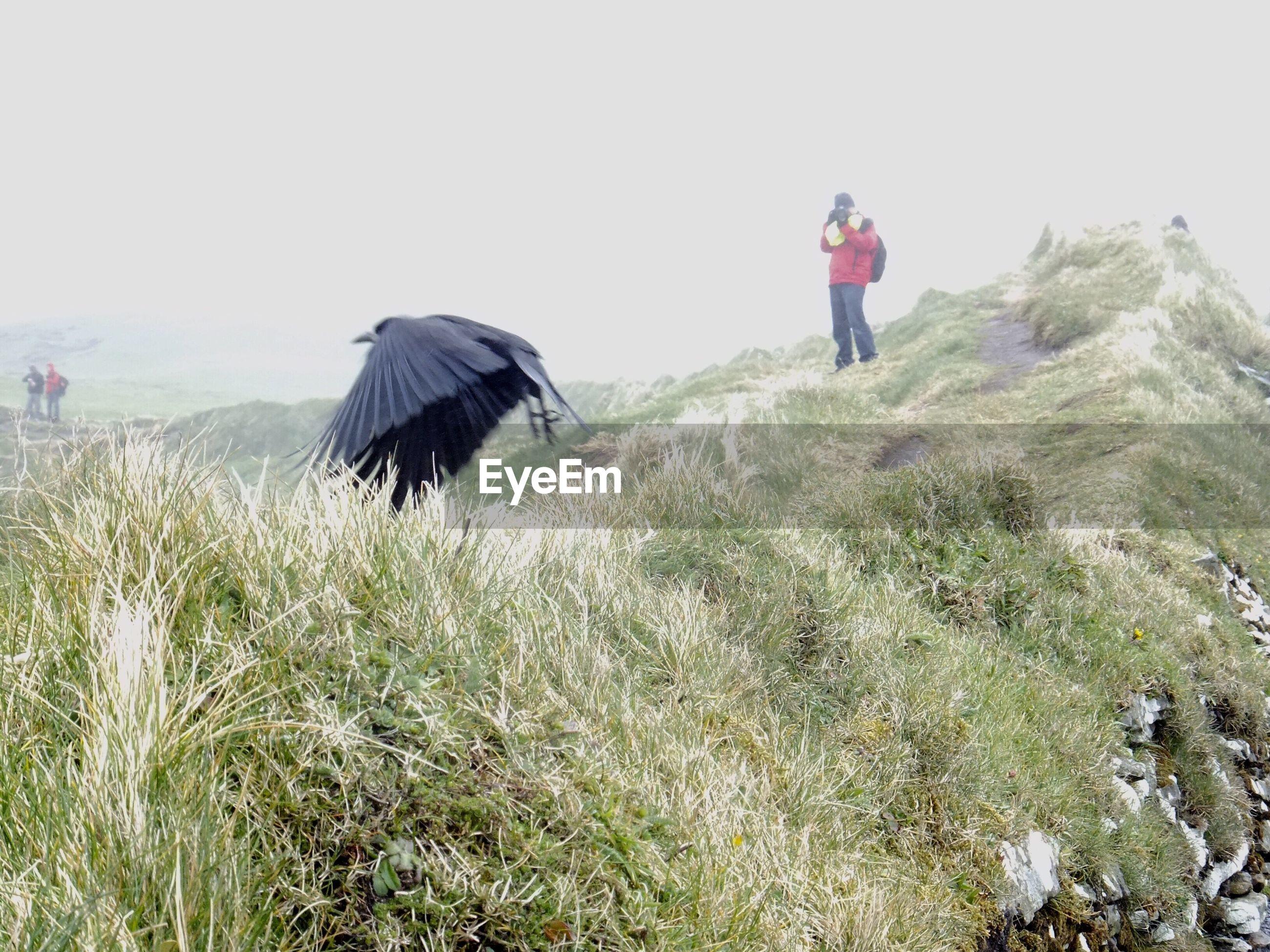 Full length of man photographing bird on grass against sky