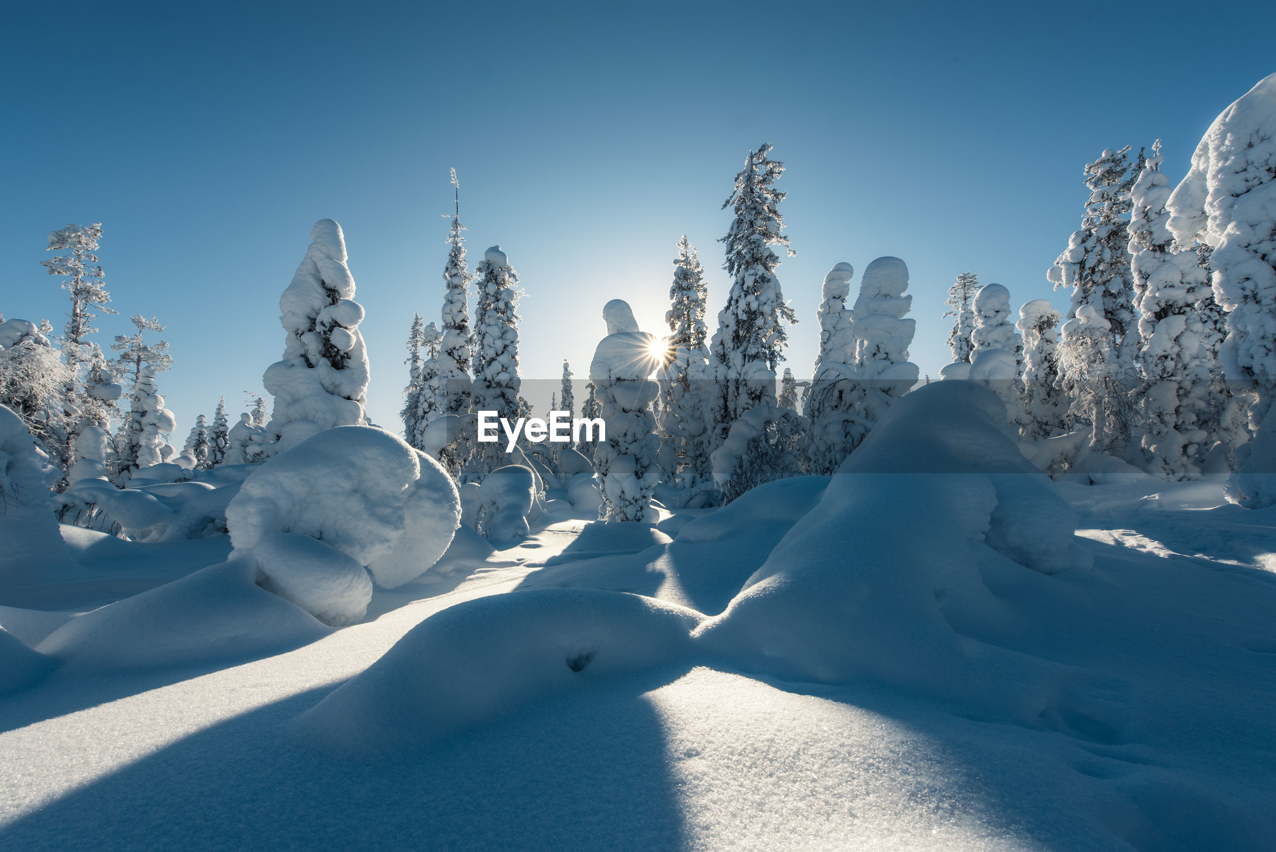 Scenic view of snow covered trees against clear blue sky in forest