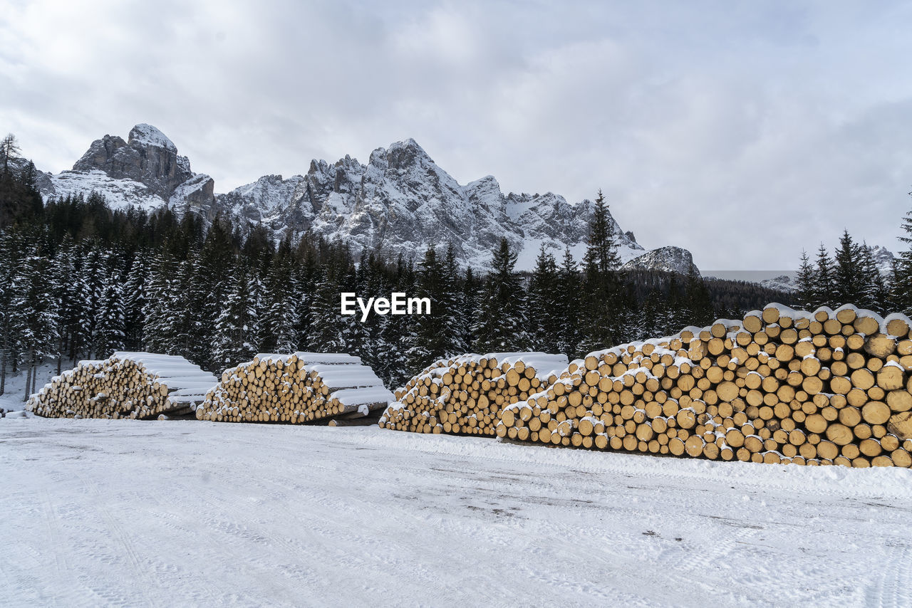 winter, cold temperature, snow, tree, cloud - sky, sky, nature, tranquility, plant, no people, covering, beauty in nature, tranquil scene, scenics - nature, day, land, log, white color, timber, outdoors, wood, snowcapped mountain, powder snow