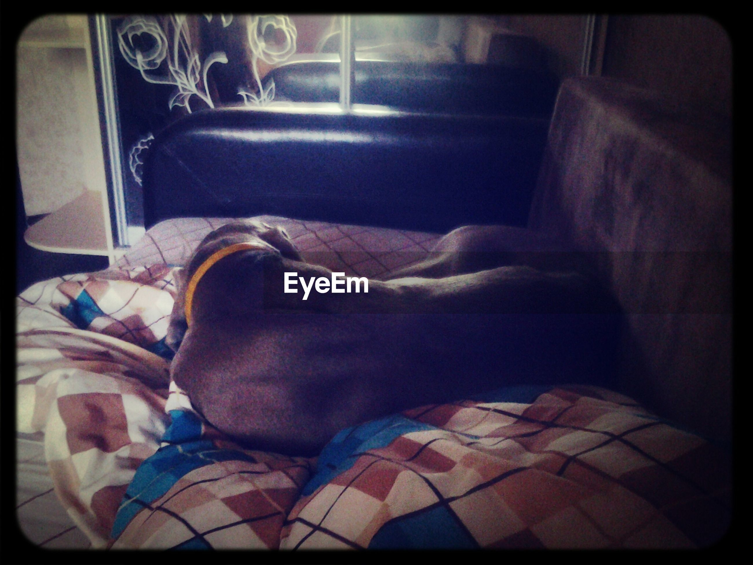 transfer print, auto post production filter, indoors, relaxation, pets, one animal, animal themes, resting, sleeping, bed, dog, domestic animals, lying down, sofa, mammal, sitting, home interior, comfortable, bedroom, one person