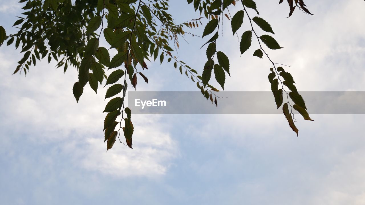 low angle view, leaf, sky, growth, tree, nature, no people, branch, outdoors, day, plant, beauty in nature