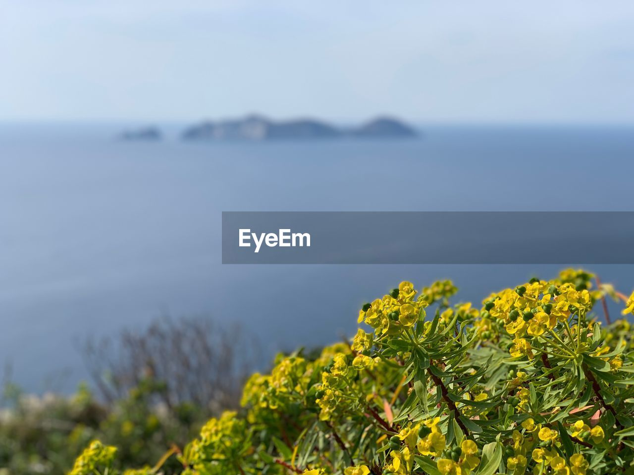 beauty in nature, plant, sea, growth, nature, sky, scenics - nature, flower, tranquility, flowering plant, water, tranquil scene, day, focus on foreground, no people, yellow, land, fragility, vulnerability, outdoors