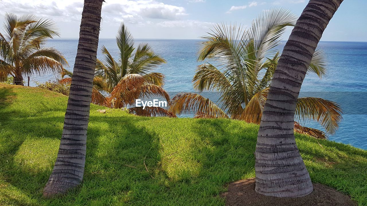 plant, tree, palm tree, grass, sky, tropical climate, water, beauty in nature, land, nature, tranquility, scenics - nature, growth, tranquil scene, sea, beach, no people, day, green color, outdoors, horizon over water