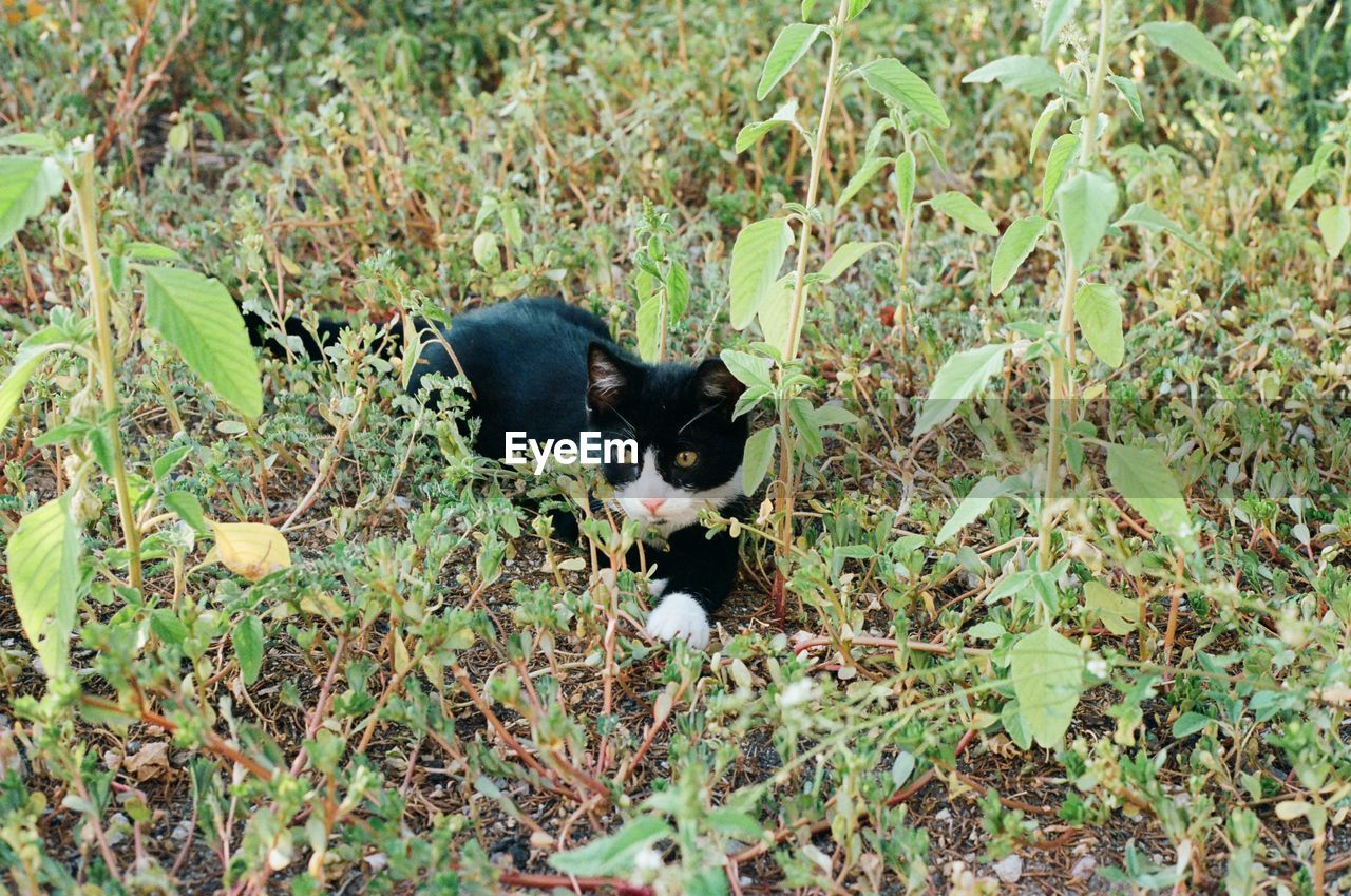 mammal, one animal, animal themes, animal, domestic, domestic animals, pets, vertebrate, plant, cat, domestic cat, feline, nature, land, no people, field, black color, day, growth, green color, whisker