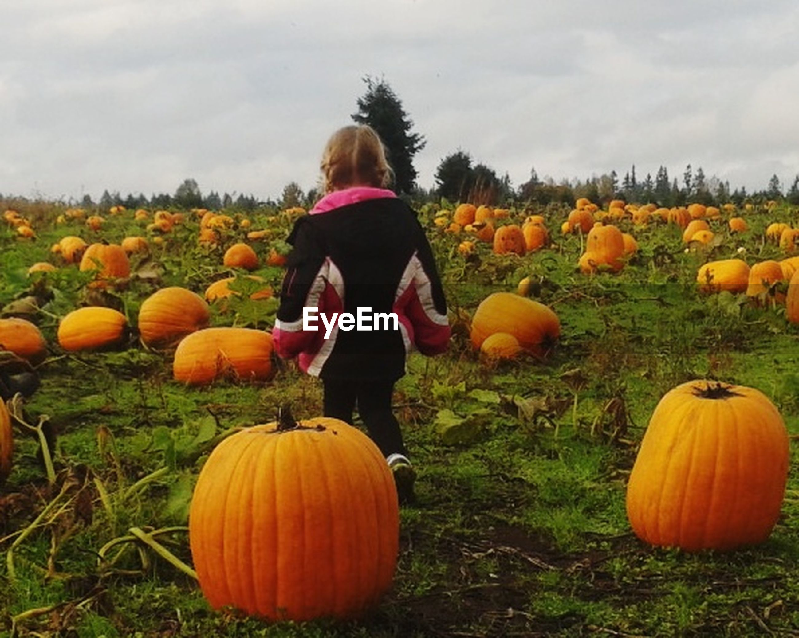 pumpkin, halloween, rear view, autumn, field, one person, vegetable, orange color, scarecrow, jack o' lantern, cloud - sky, childhood, sky, agriculture, children only, choice, day, celebration, one girl only, nature, outdoors, grass, growth, standing, holiday - event, people, rural scene, child, girls, tree, multi colored, freshness, real people, beauty in nature, young adult, jack o lantern, adult, witch