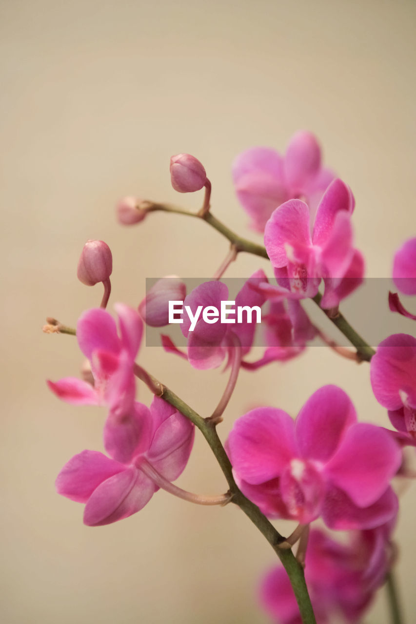 flowering plant, flower, pink color, plant, beauty in nature, vulnerability, freshness, fragility, close-up, petal, growth, nature, no people, twig, blossom, selective focus, flower head, inflorescence, branch, bud, springtime, outdoors