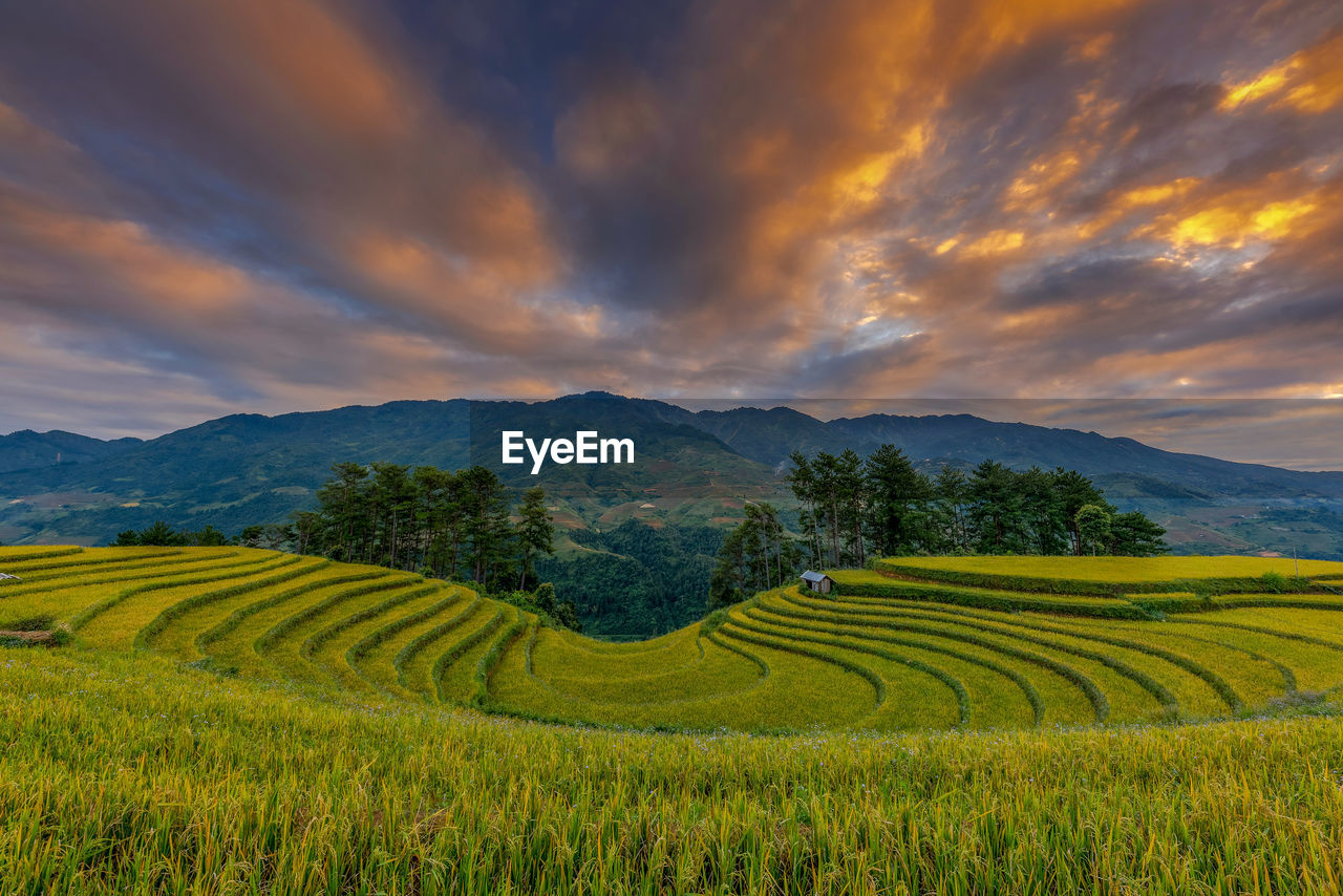 SCENIC VIEW OF RICE FIELD AGAINST CLOUDY SKY
