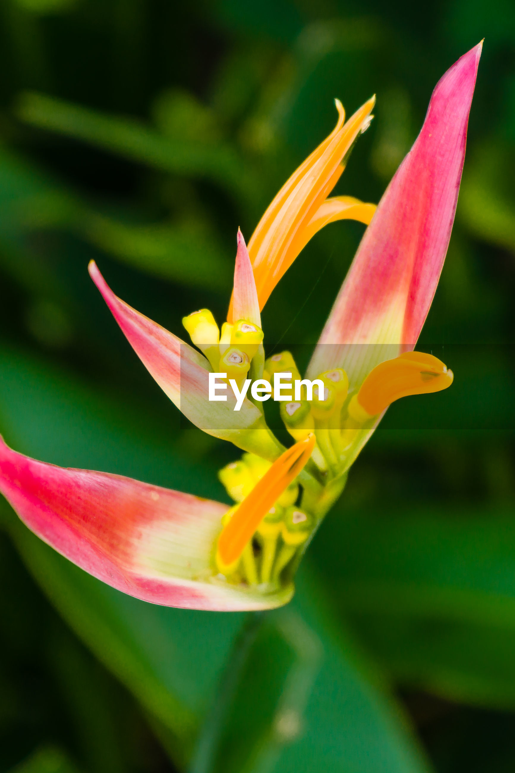 CLOSE-UP OF FRESH YELLOW LILY BLOOMING OUTDOORS