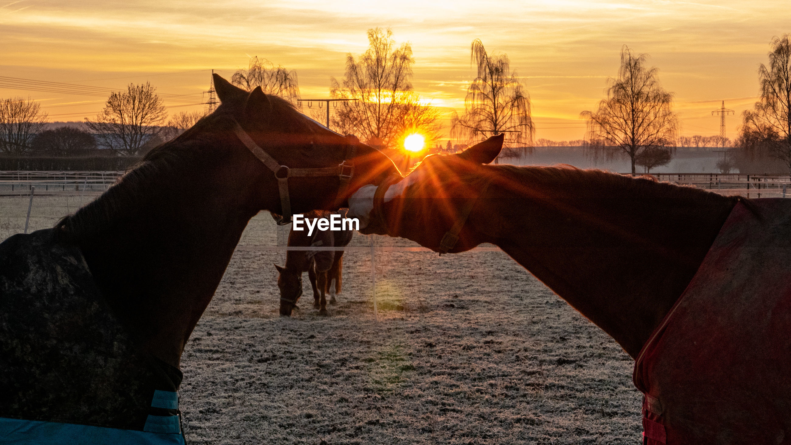 VIEW OF HORSE IN RANCH AT SUNSET
