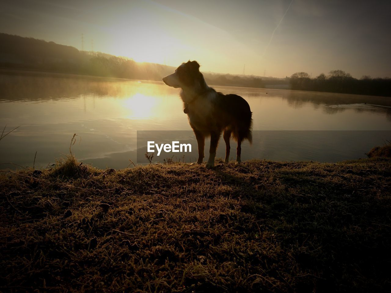 domestic animals, one animal, animal themes, mammal, nature, sunset, pets, dog, sky, outdoors, silhouette, lake, sun, field, water, no people, standing, beauty in nature, grass, scenics, landscape, full length, day