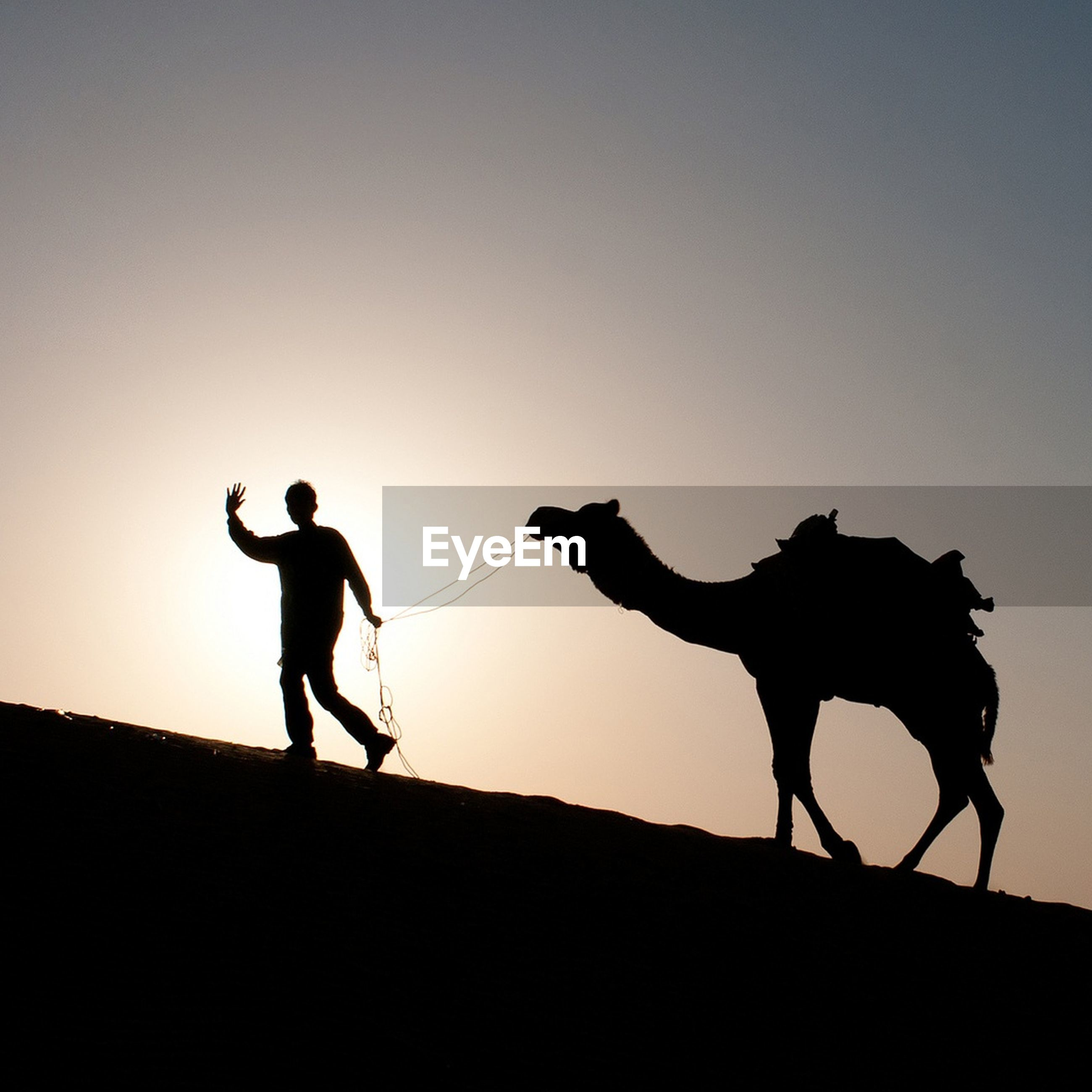 Silhouette herder with camel against clear sky
