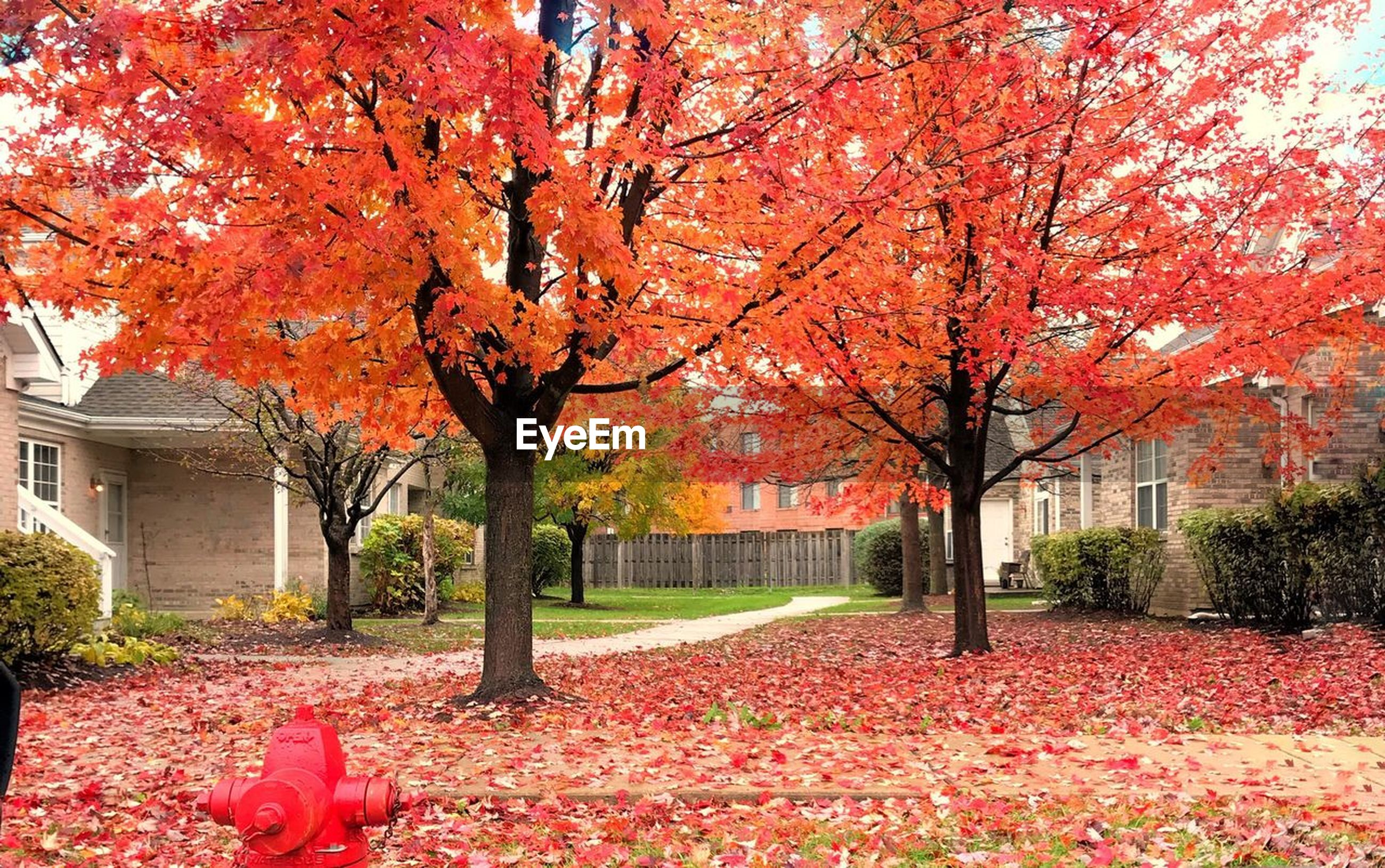 autumn, change, leaf, tree, red, nature, building exterior, orange color, beauty in nature, scenics, architecture, no people, outdoors, maple leaf, built structure, maple tree, tranquility, multi colored, day, fragility, branch, maple, sky