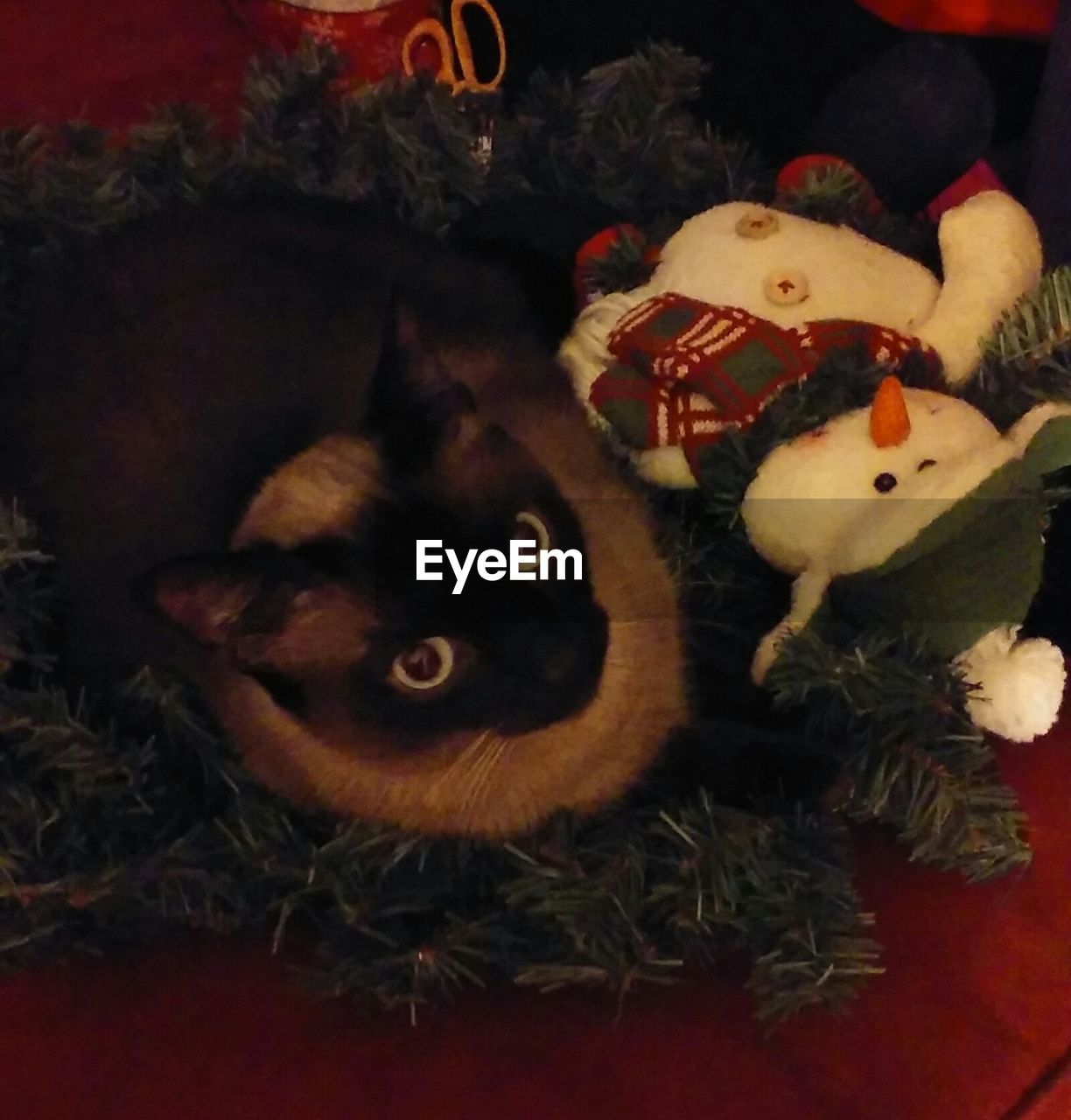 indoors, christmas decoration, christmas, domestic animals, celebration, no people, animal themes, pets, stuffed toy, looking at camera, night, mammal, portrait, close-up