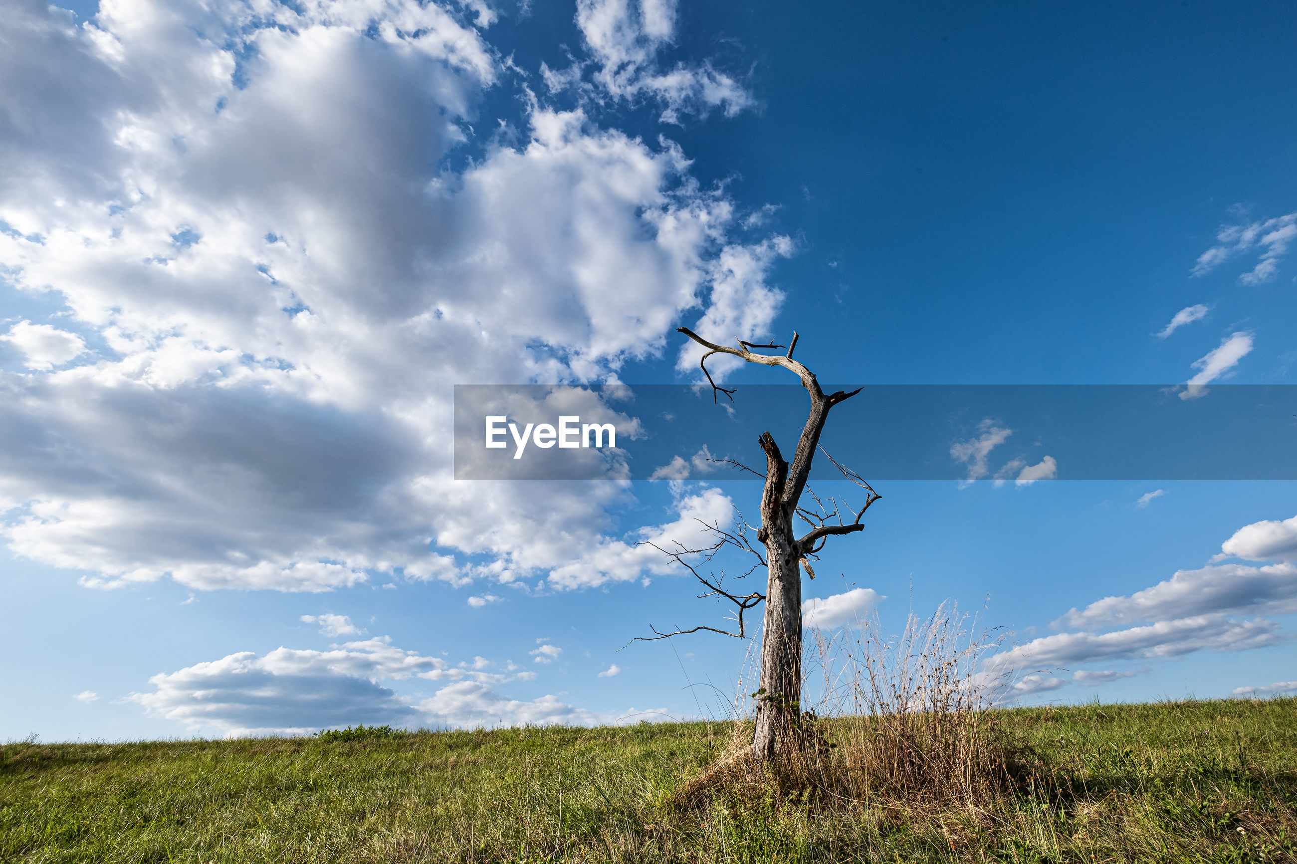 Dead tree on field against blue sky with scattered clouds
