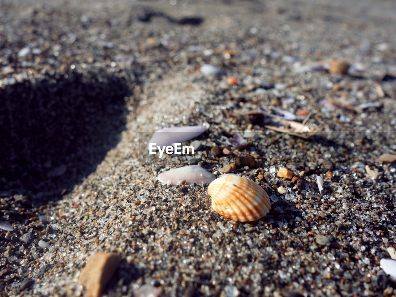 beach, animal shell, sand, hermit crab, animal themes, one animal, seashell, nature, snail, day, animals in the wild, outdoors, gastropod, sea, sea life, close-up, no people, animal wildlife, beauty in nature, fragility