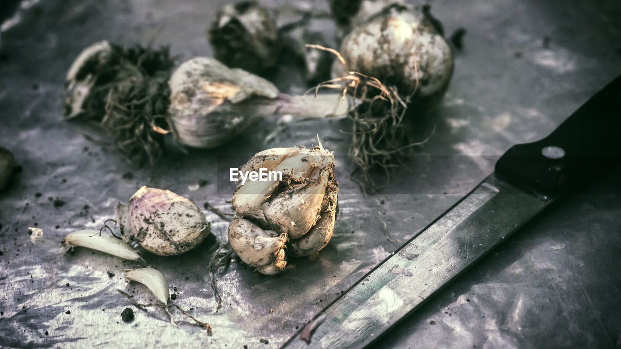 Fresh harvested garlic bulb agriculture planting farm gardening produce