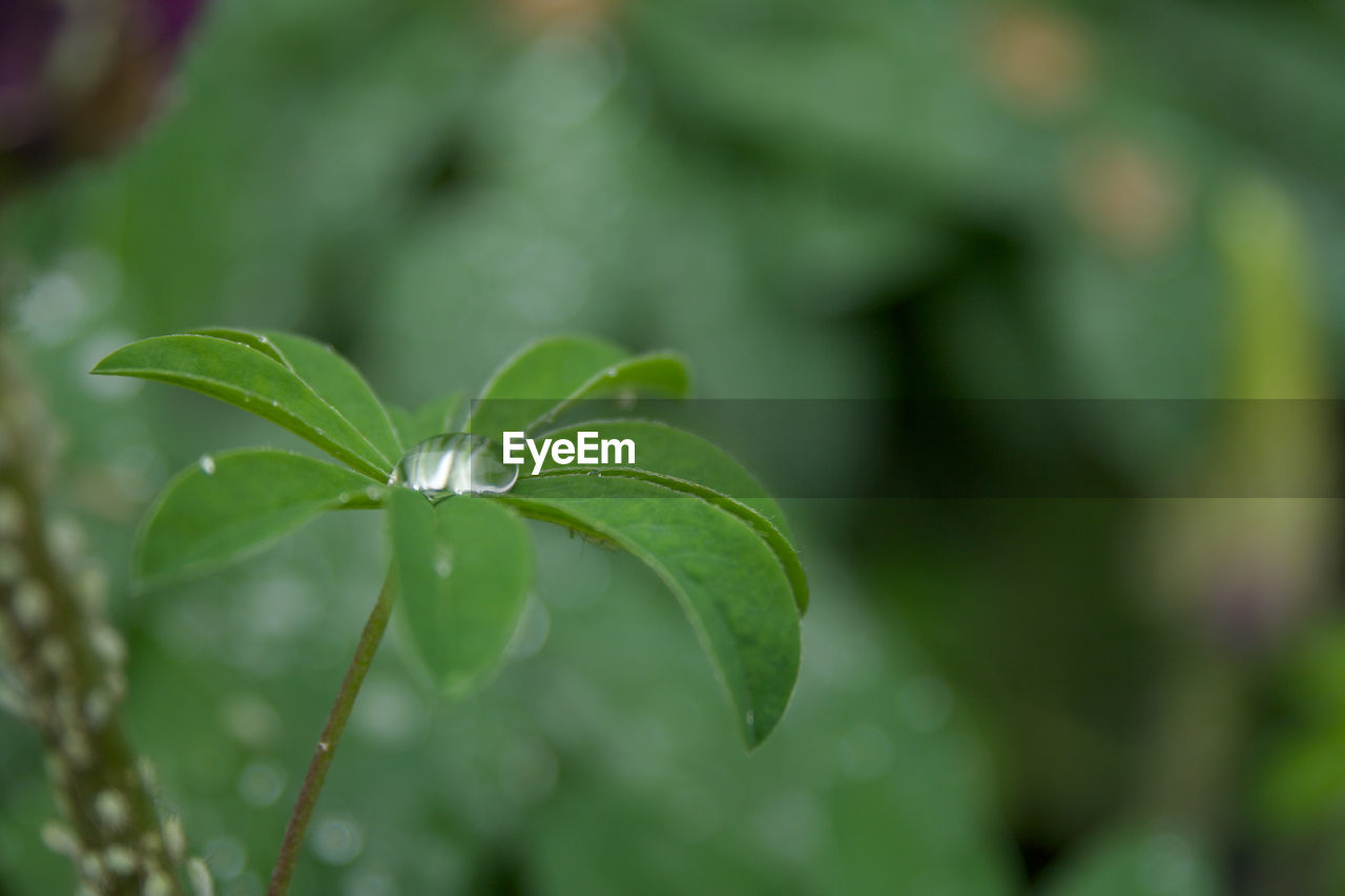 leaf, green color, growth, plant, focus on foreground, nature, close-up, outdoors, no people, fragility, day, beauty in nature, freshness