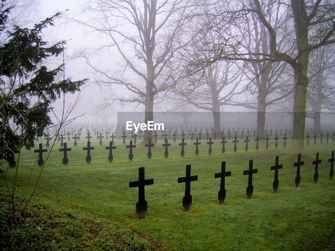 grave, cemetery, tombstone, tree, plant, stone, fog, in a row, nature, grass, religion, no people, memorial, cross, spirituality, day, the past, history, outdoors