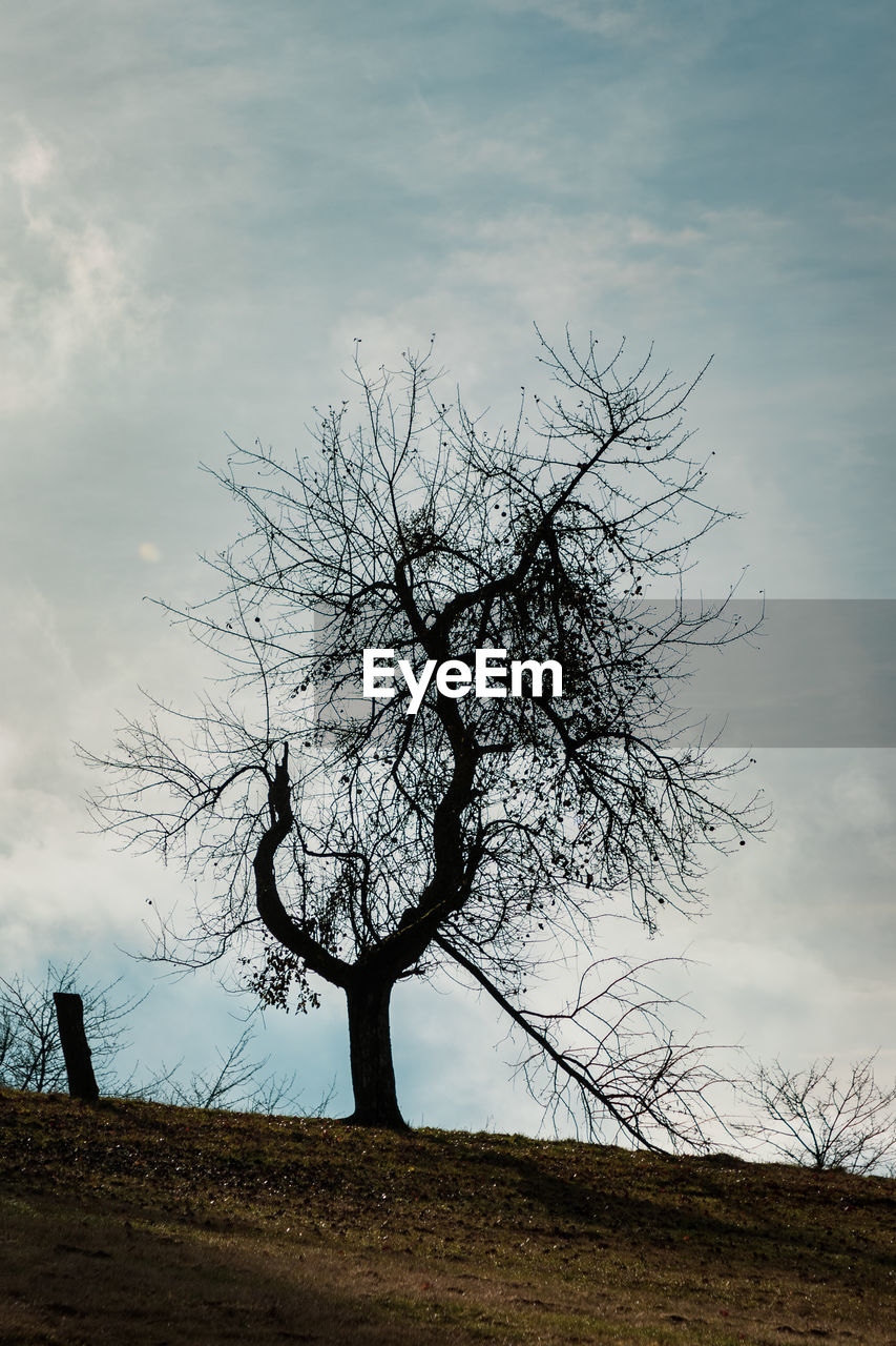 tree, bare tree, sky, plant, cloud - sky, field, beauty in nature, land, nature, tranquility, branch, landscape, non-urban scene, tranquil scene, scenics - nature, no people, outdoors, environment, trunk, day, dead plant, isolated