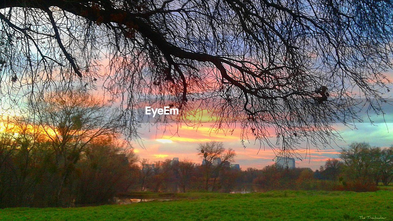 tree, nature, tranquility, beauty in nature, tranquil scene, bare tree, branch, scenics, outdoors, autumn, no people, sunset, landscape, growth, grass, sky, day