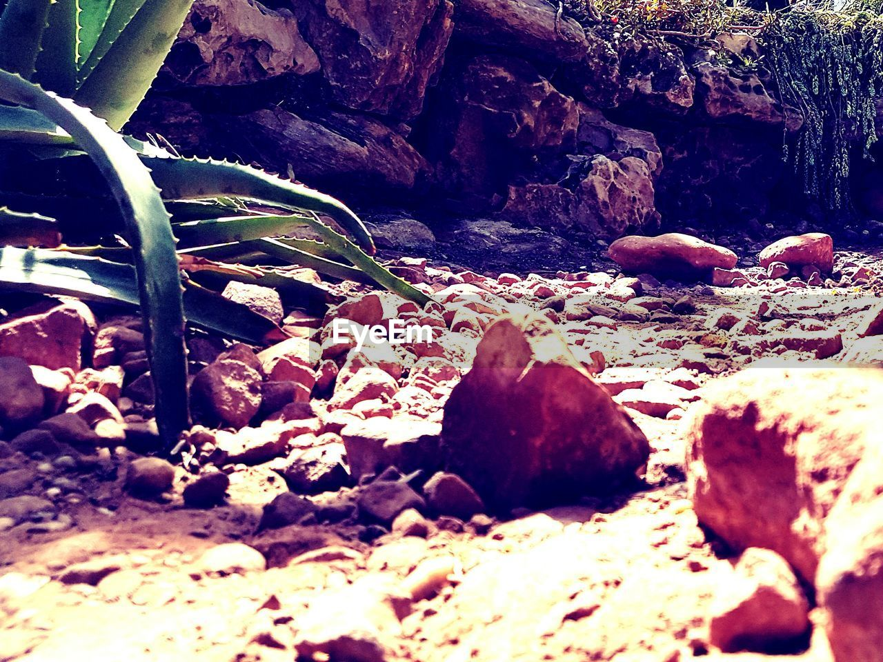 nature, rock - object, beauty in nature, day, outdoors, no people, tranquility, beach, sand, pebble beach
