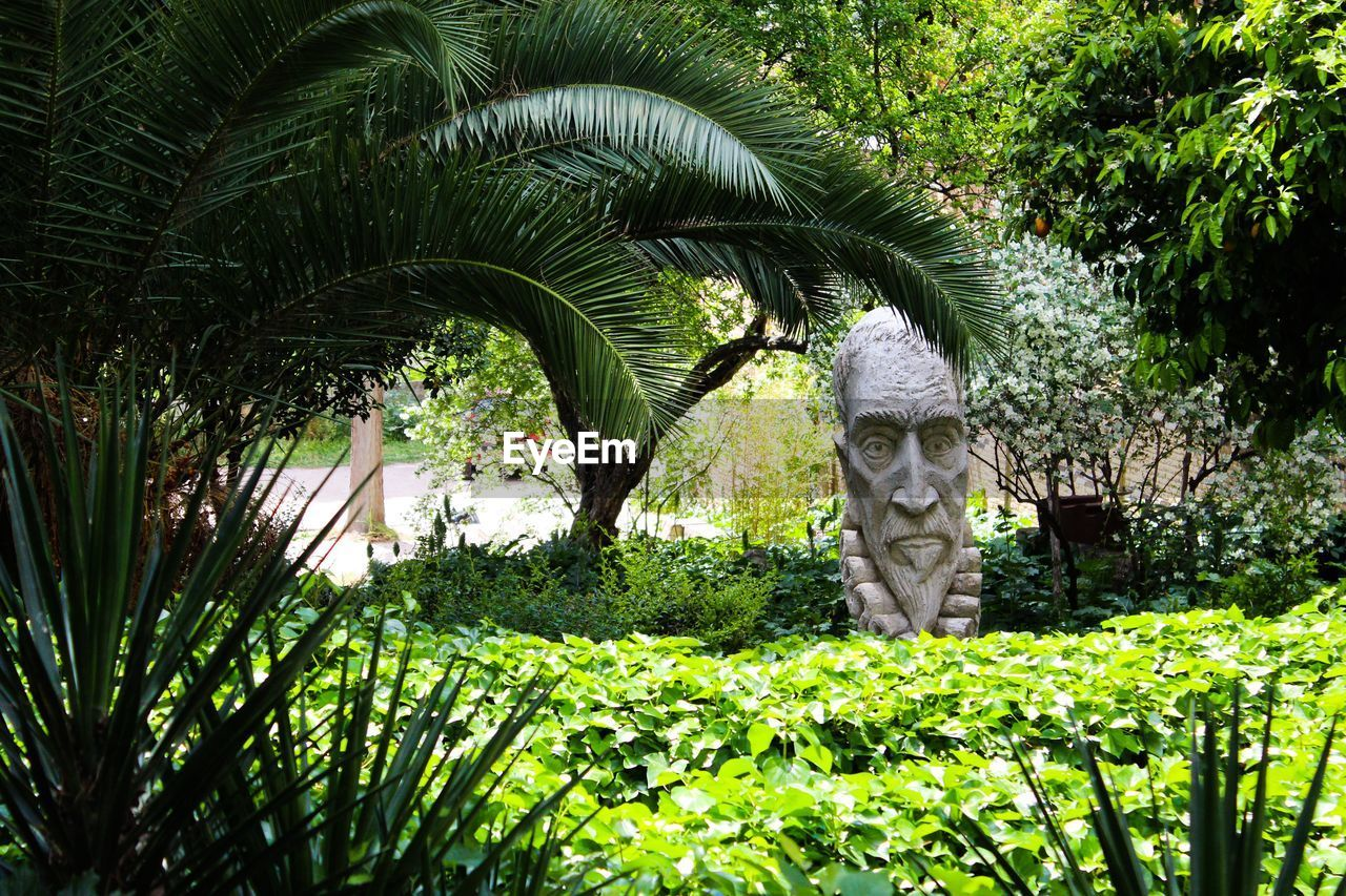 Trees and sculpture at park