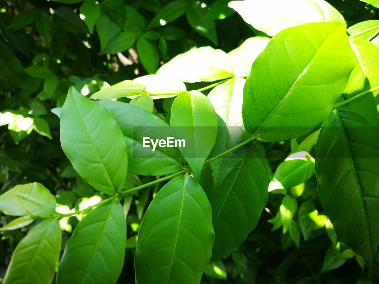leaf, green color, growth, nature, outdoors, day, close-up, beauty in nature, freshness, no people, plant, tree, fragility