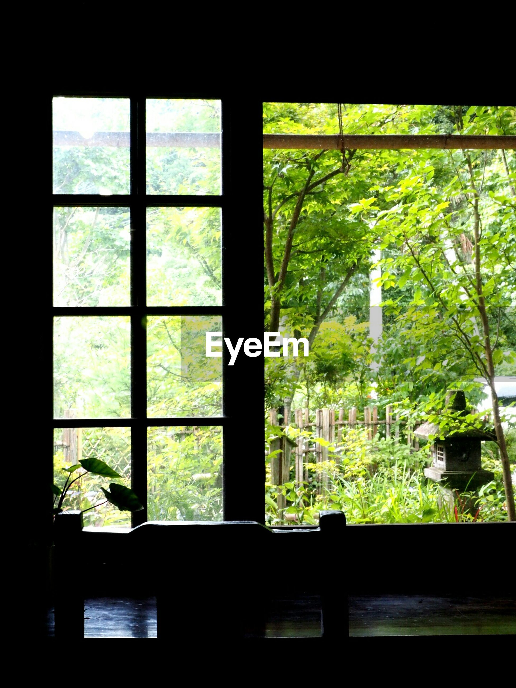 window, indoors, tree, transparent, glass - material, looking through window, growth, home interior, window sill, glass, sunlight, day, plant, house, built structure, dark, nature, curtain, no people, window frame