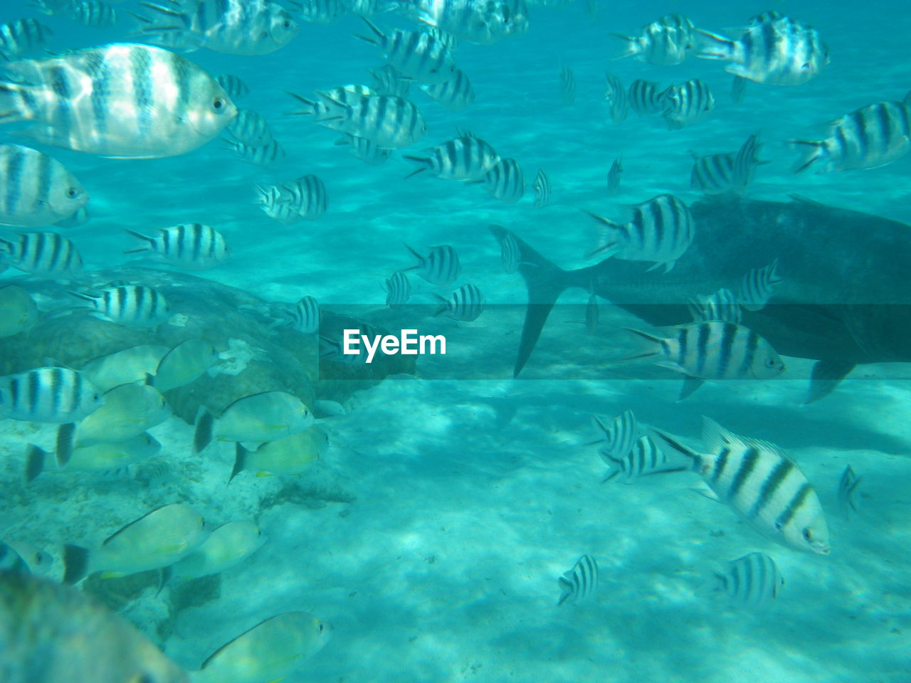 large group of animals, animal themes, animals in the wild, fish, underwater, no people, water, nature, day, swimming, sea life, undersea, beauty in nature, outdoors
