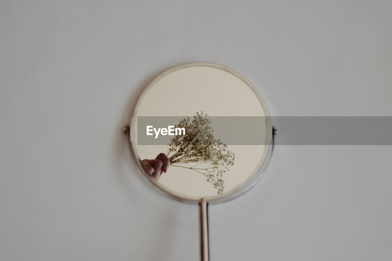 studio shot, indoors, white background, plant, geometric shape, circle, no people, still life, copy space, shape, close-up, directly above, nature, glass - material, food and drink, white color, focus on foreground, transparent, design, mirror