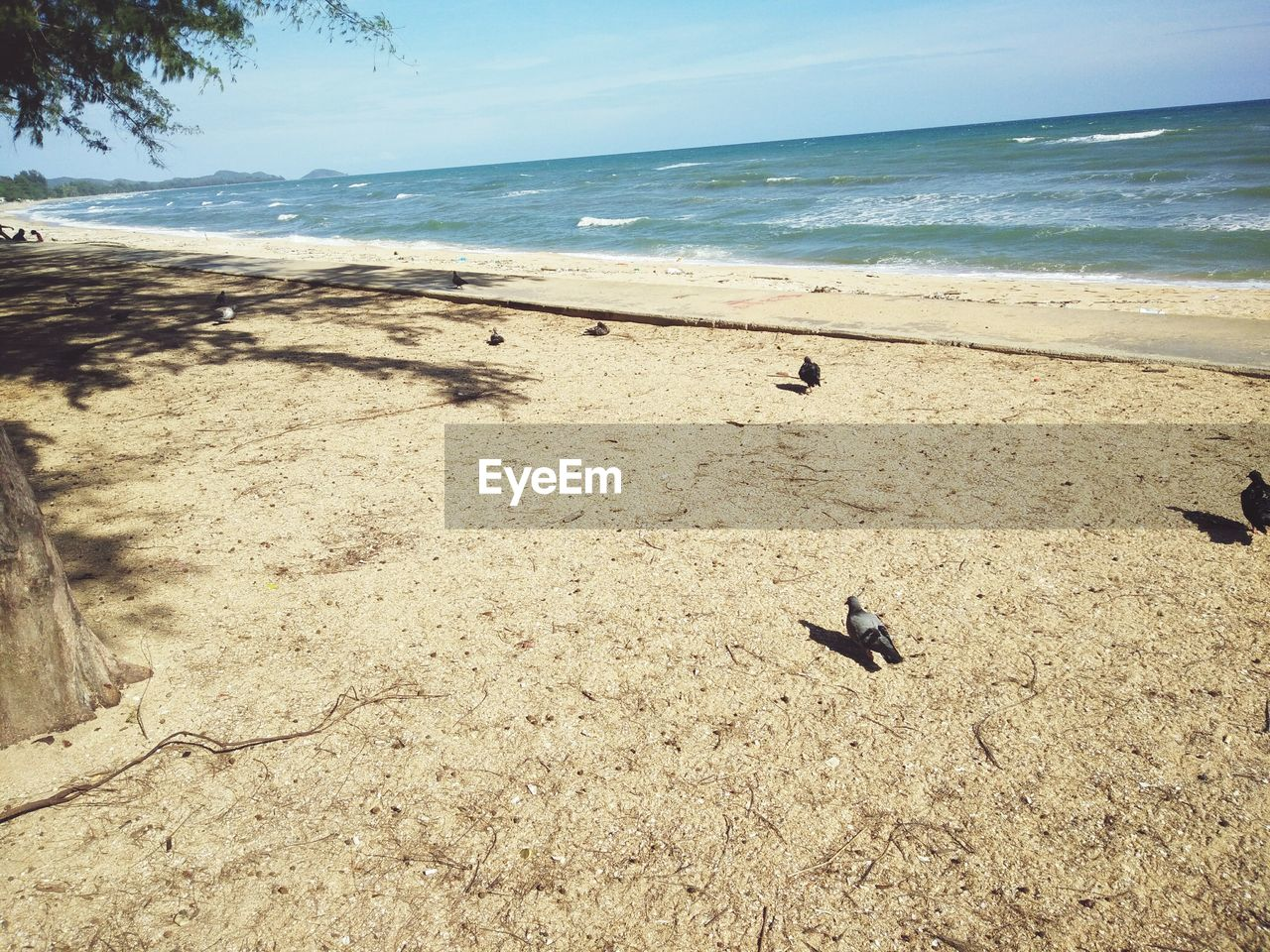 Pigeons At Beach During Sunny Day