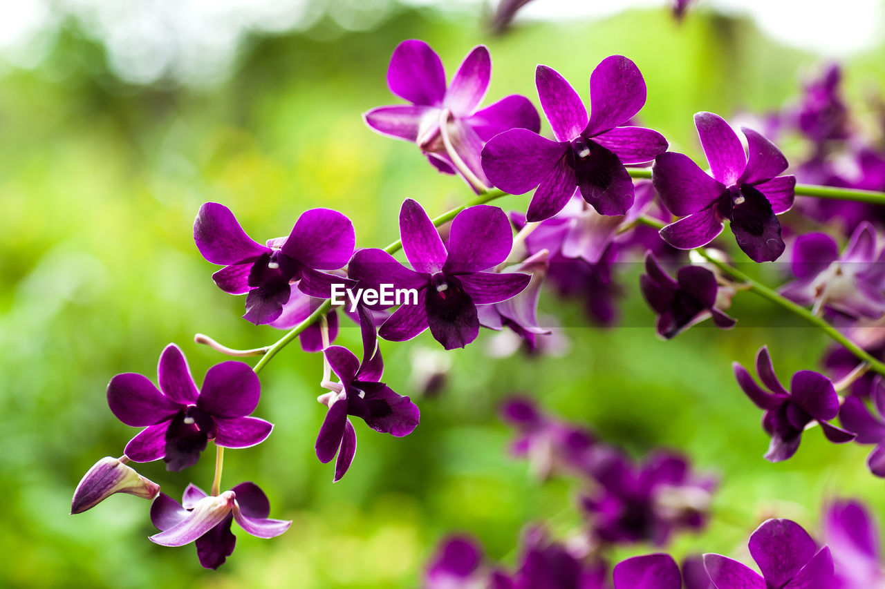 flower, flowering plant, vulnerability, beauty in nature, plant, fragility, petal, freshness, close-up, growth, purple, focus on foreground, nature, inflorescence, flower head, no people, day, outdoors, selective focus, pink color, lilac