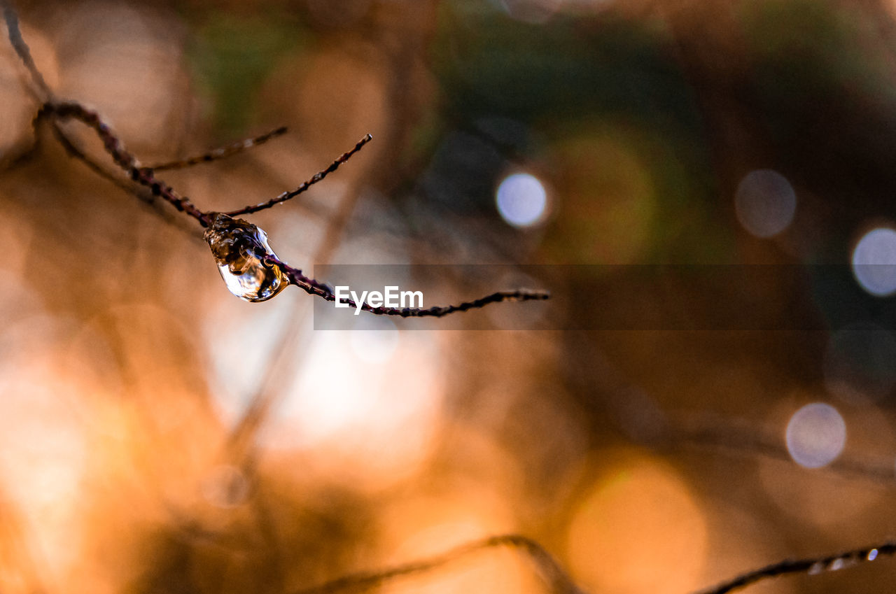 CLOSE-UP OF WET SPIDER WEB ON TREE