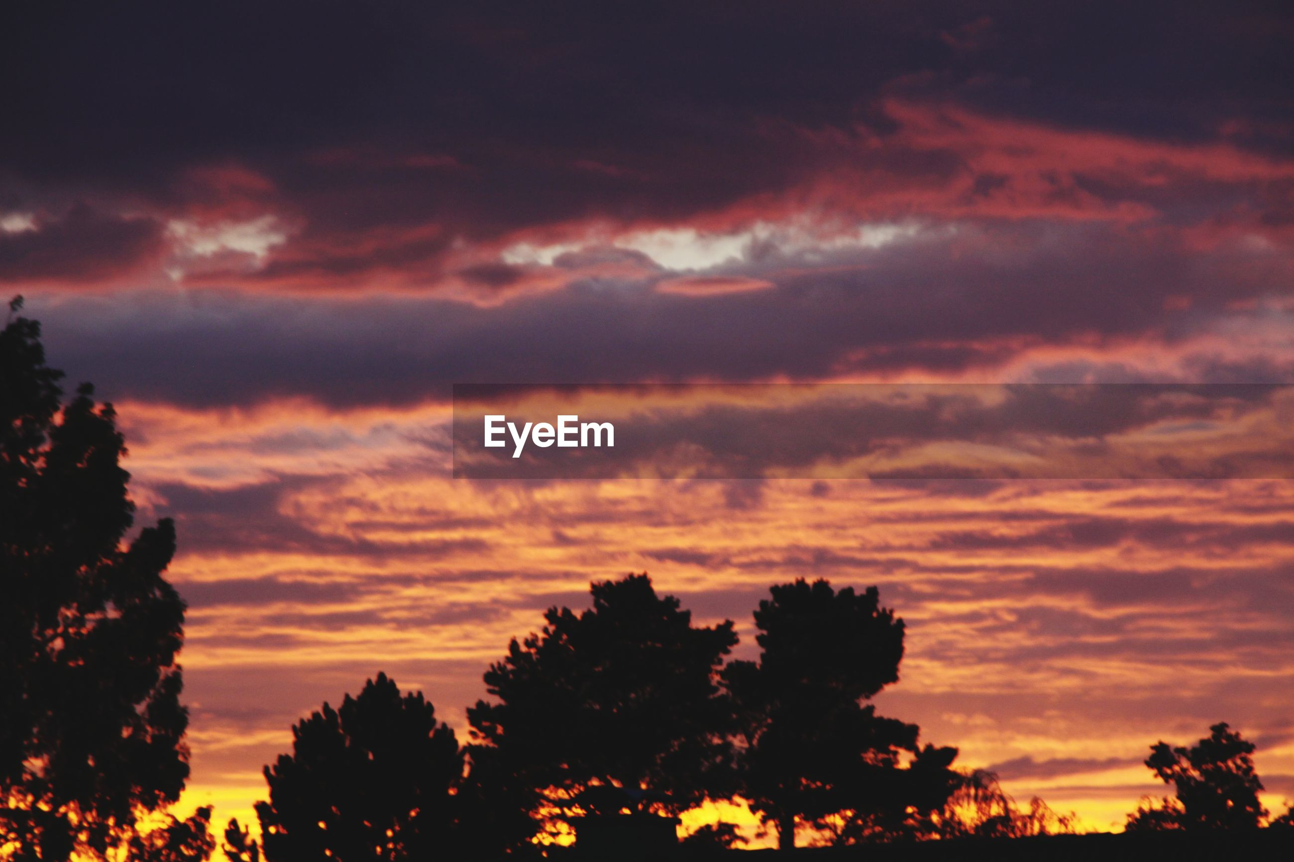 sky, cloud - sky, sunset, beauty in nature, tree, silhouette, scenics - nature, tranquility, plant, orange color, tranquil scene, nature, no people, idyllic, outdoors, dramatic sky, low angle view, growth, atmospheric mood, romantic sky