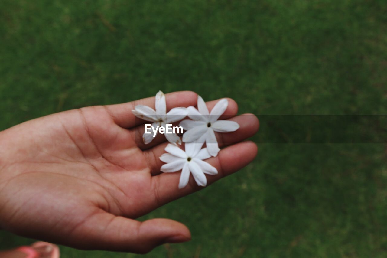 human hand, human body part, one person, white color, holding, real people, close-up, flower, fragility, day, outdoors, nature, flower head, freshness, people
