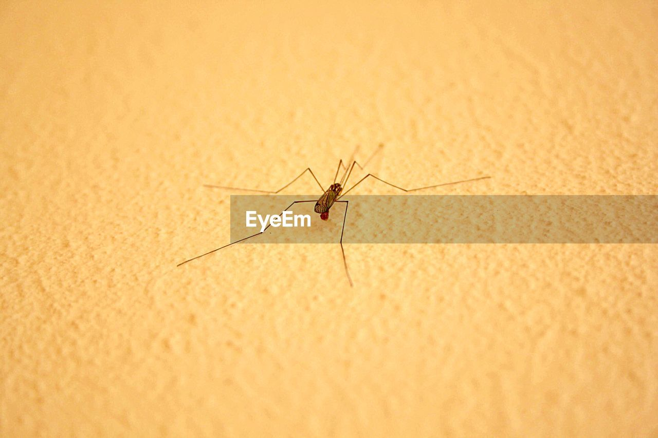invertebrate, animal wildlife, animals in the wild, animal themes, one animal, insect, animal, close-up, mosquito, no people, selective focus, animal body part, indoors, day, zoology, arthropod, nature, wall - building feature, spider