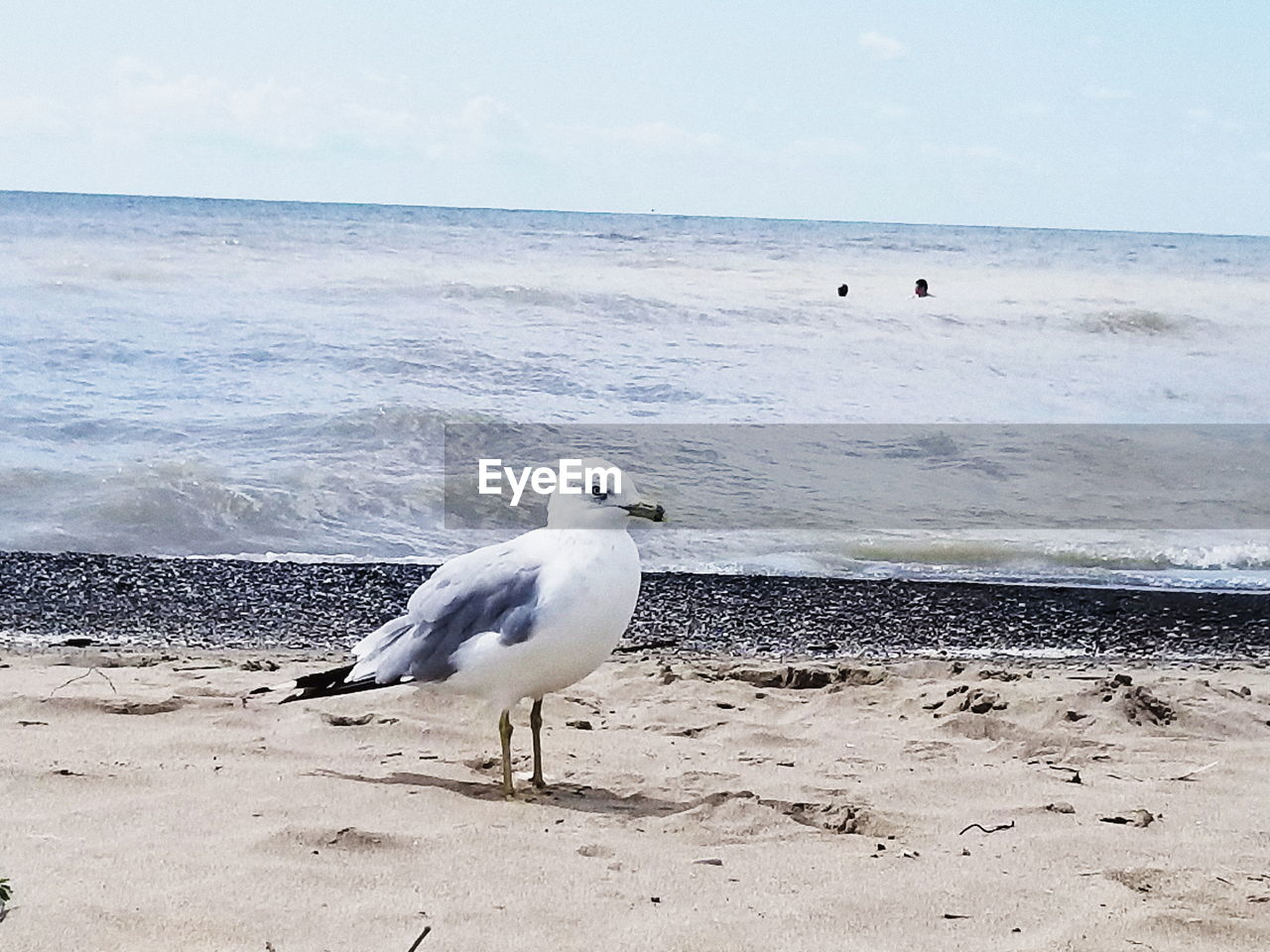 sea, beach, horizon over water, water, bird, sand, nature, one animal, shore, beauty in nature, animal themes, animals in the wild, sky, day, outdoors, scenics, seagull, no people, wave