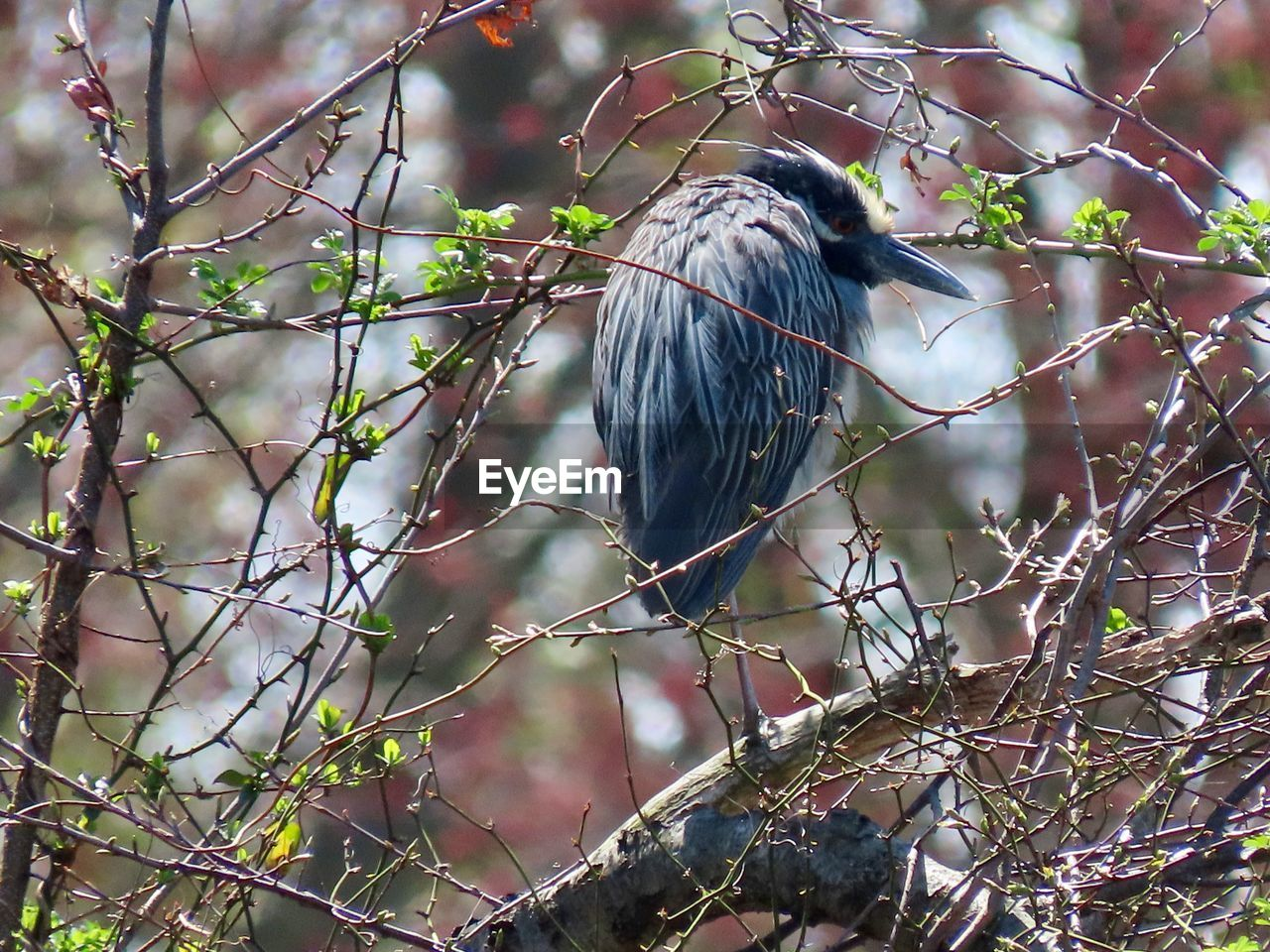 animal wildlife, vertebrate, bird, animals in the wild, animal, animal themes, one animal, tree, branch, perching, plant, no people, day, focus on foreground, nature, outdoors, selective focus, bare tree, twig, low angle view
