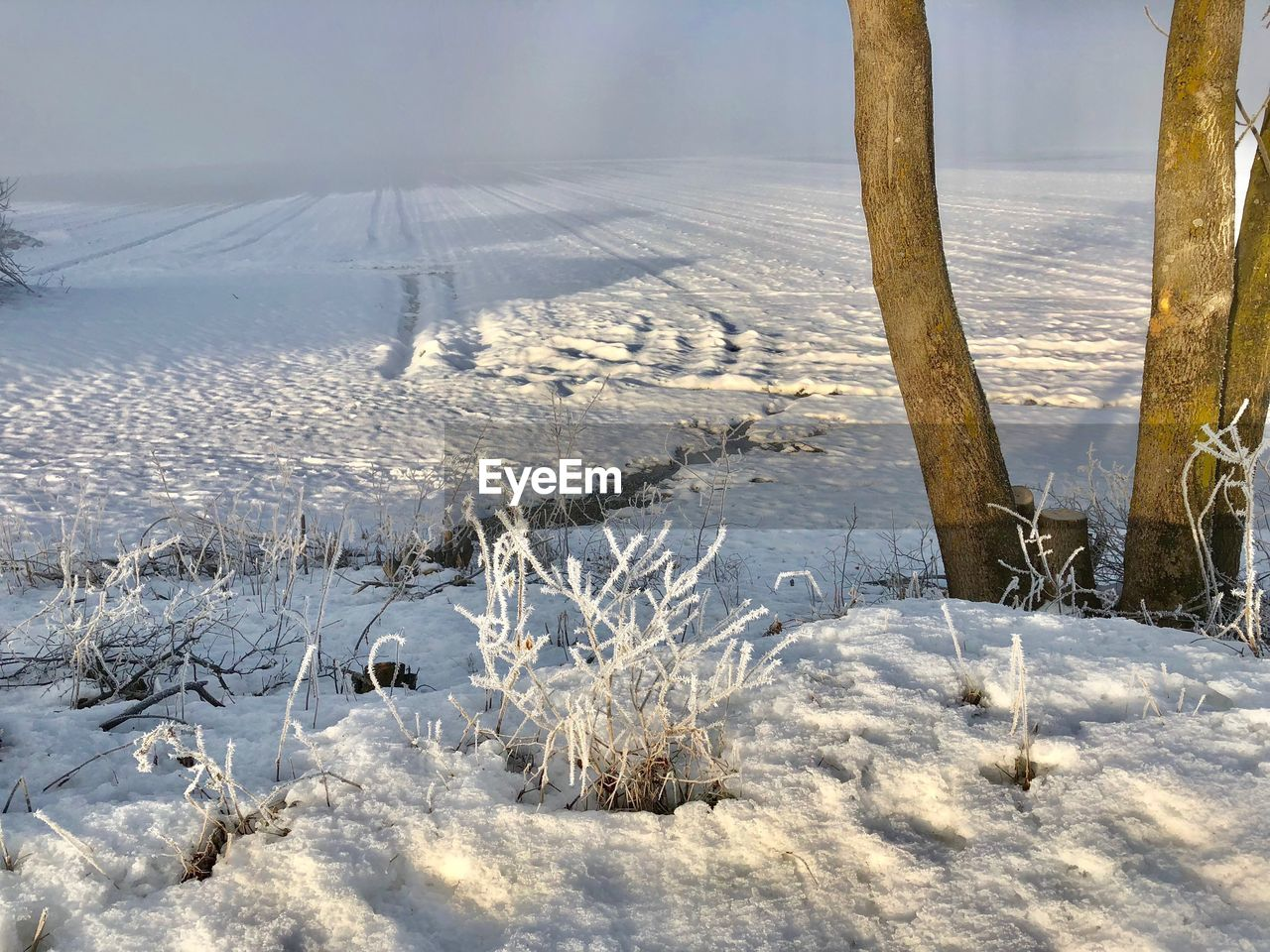 snow, cold temperature, winter, no people, covering, nature, plant, beauty in nature, land, white color, field, tranquility, day, landscape, tranquil scene, environment, frozen, scenics - nature, tree, outdoors, extreme weather