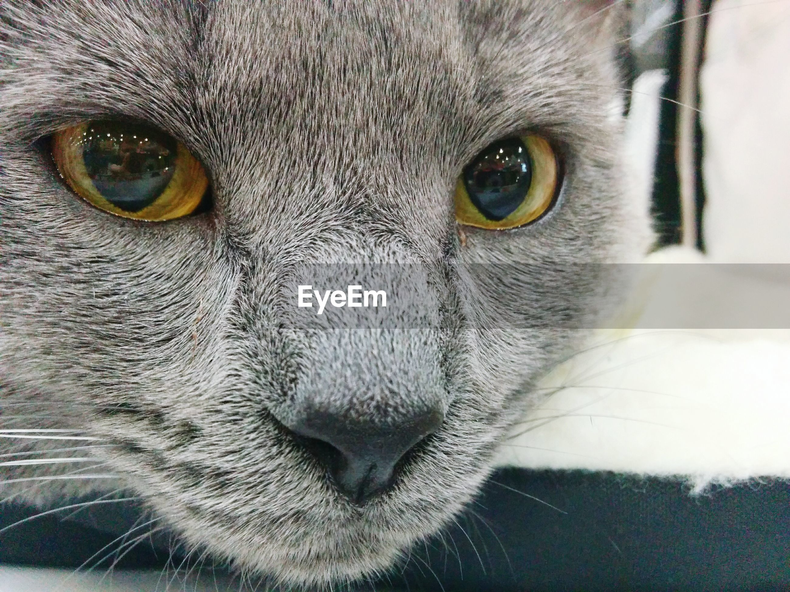 Extreme close up of cat
