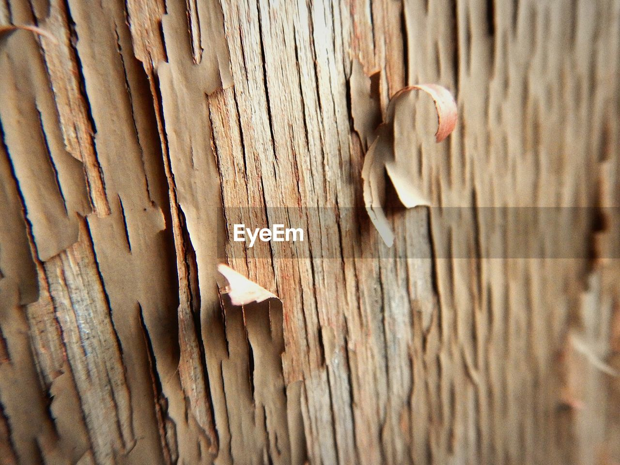 wood - material, close-up, textured, rough, day, no people, outdoors, animal themes