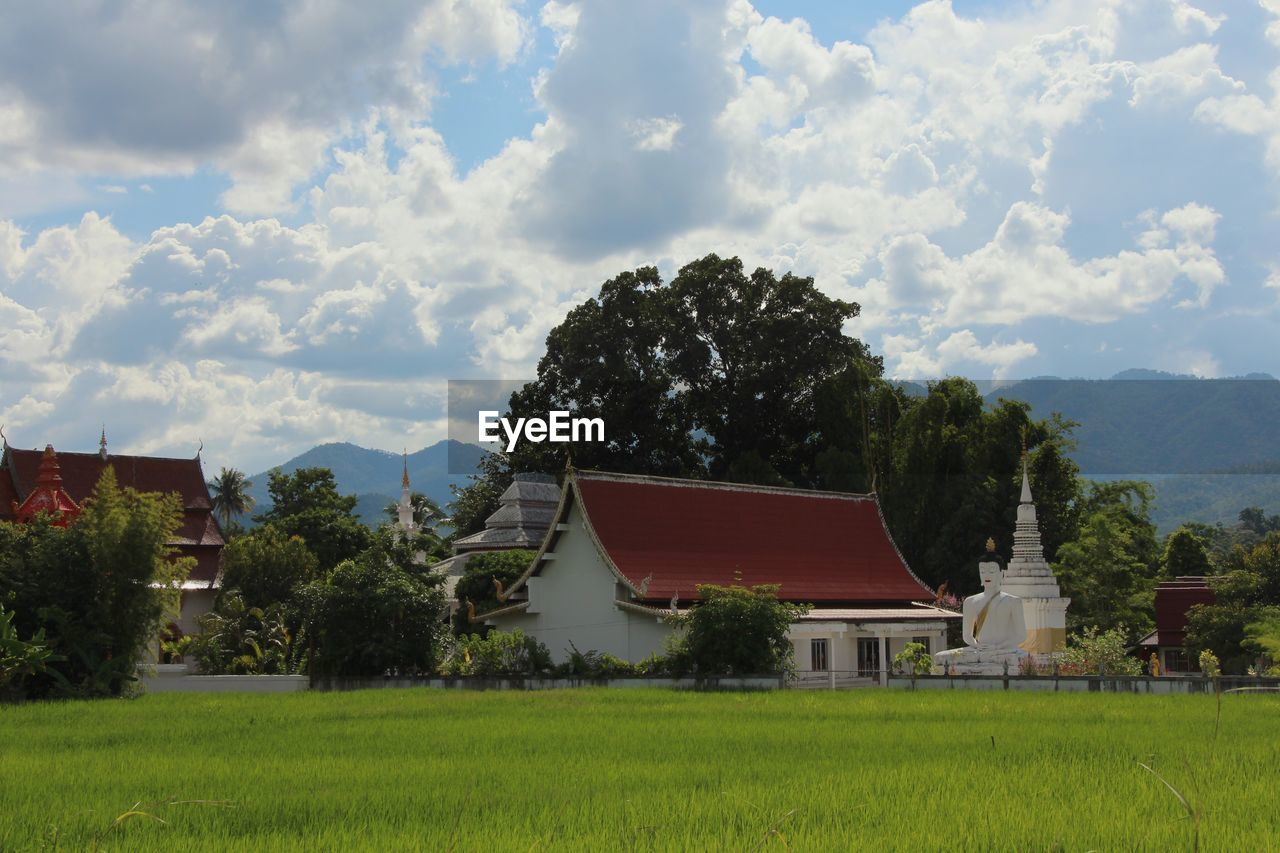 Rice Paddy On Field Against Buddhist Temple